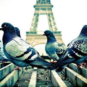 Philothérapie : Article n°37 : Quitter la France a-t-il un sens philosophique?