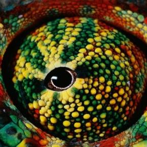 Cassirer et les sciences de la culture : III. Phénoménologie de la perception et prégnance symbolique: l'élaboration d'une philosophie de larelation