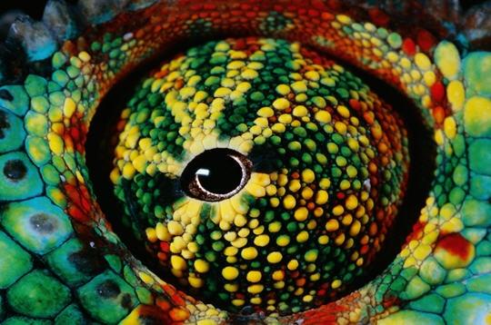 Cassirer et les sciences de la culture : III. Phénoménologie de la perception et prégnance symbolique: l'élaboration d'une philosophie de la relation